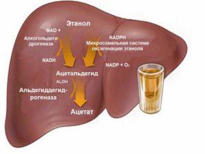 Болит печень после алкоголя: что делать и как лечить