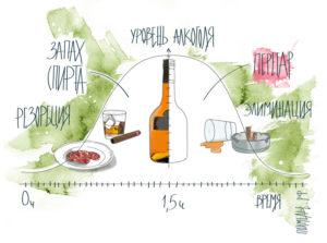 Как избавиться от запаха алкоголя: какое средство быстро перебивает, убивает, отбивает, убирает и что съесть