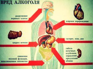 О пользе водки для организма человека и ее вред для здоровья