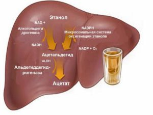 Болит печень после алкоголя