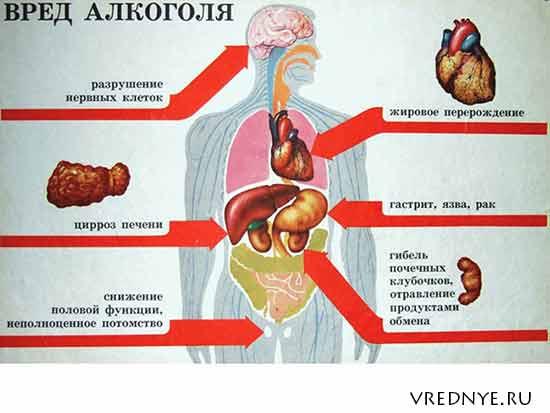 Влияние алкоголя на женский организм реферат 7747
