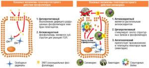 Гепатопротекторы ифосфолипиды для печени: применение средств при лечение, фармакология, функции