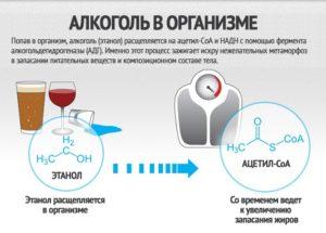 Толстеют ли от алкоголя: калорийность и воздействие на организм